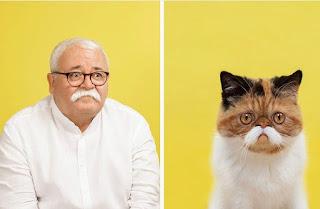 Un fotógrafo compara retratos de gatos y humanos