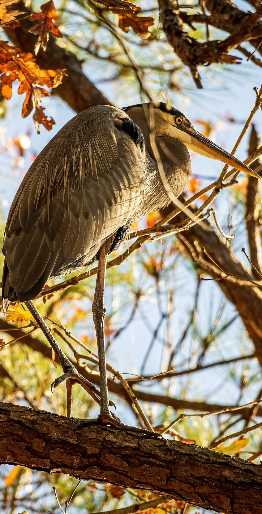 Heron on a tree branch.