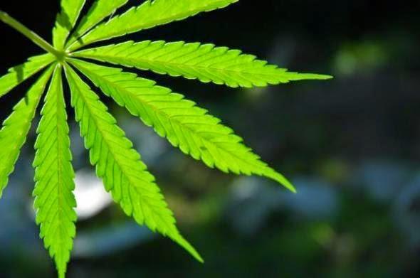 Έρευνα: Οι συνέπειες από χρήση μαριχουάνας και χασίς