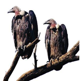 Resultado de imagem para abutres do pt charge