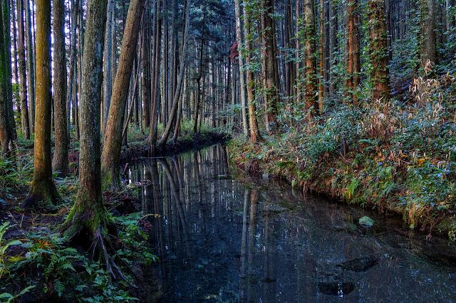 #photo #landscape #sigma #foveon #sdquattroh #japan #yamagata #yuza #山形県 #遊佐町 #山形帝國 #写真 #風景写真