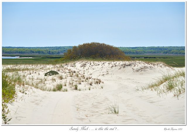 Sandy Neck: ... is this the end?...