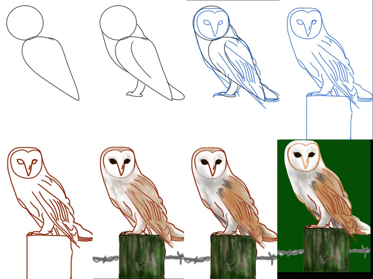 Owl drawing for kids easy step by step how to draw an owl color