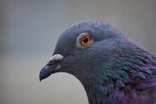 Burung Kolong