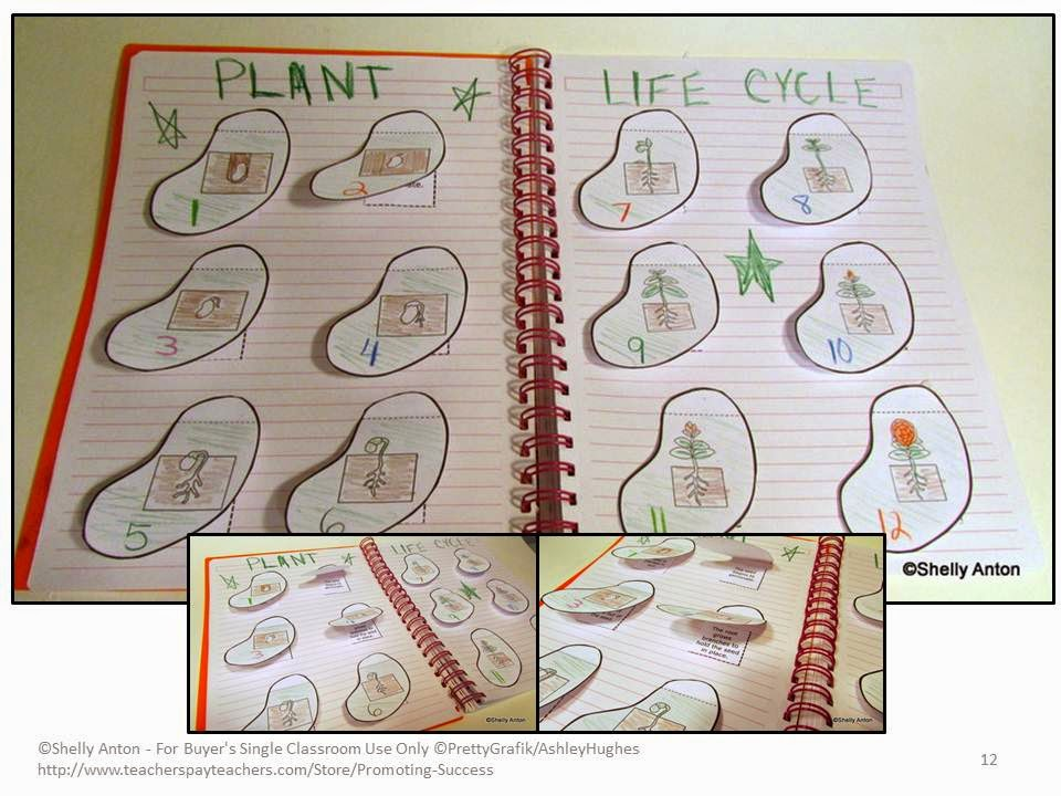Promoting Success Plant Life Cycle Activities for Kids – Plant Life Cycle Worksheet