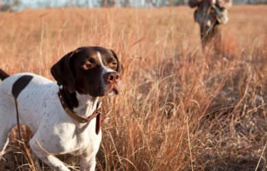 Πότε τελειώνει το κυνήγι για την κυνηγετική περίοδο 2019-2020