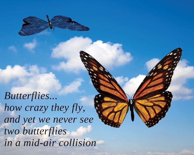 butterflies fly crazy