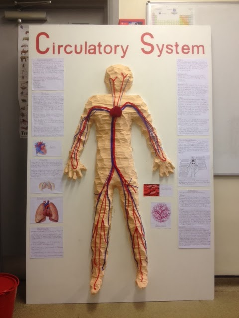 Circulatory System Research Paper Mydecoratingtips Com