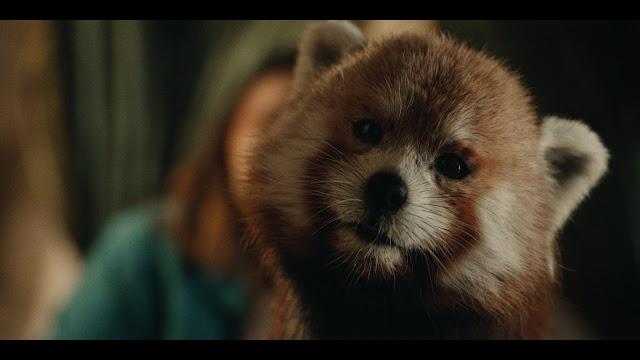 Pantalaimon Red Panda