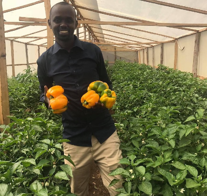 Which are the best agribusinesses to engage in, especially for the youth in Kenya?