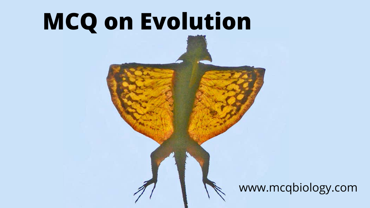 Multiple Choice Questions on Evolution -  The patagium of the Draco is an example for