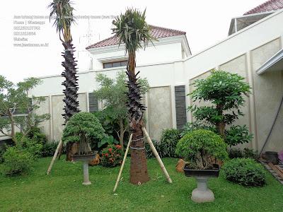 Taman tropis surabaya jawa timur jasataman.co.id