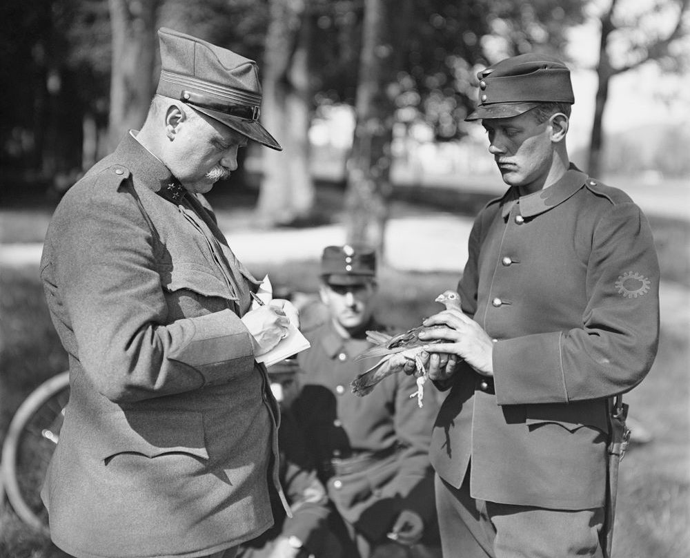 Two Swiss Army soldiers prepare a homing pigeon for dispatching