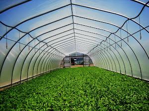 Plastik Uv Bermanfaat Untuk Atap Greenhouse