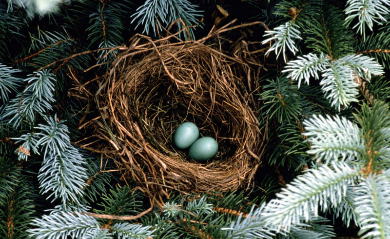 What to Do If You Find a Bird's Nest