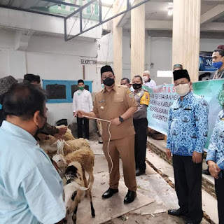 Bupati Serahkan Hewan Kurban Kepada Perwakilan Badan Kerukunan Muslim Kabupaten Samosir