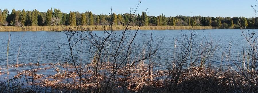 Paisajes en el Alafia River State Park