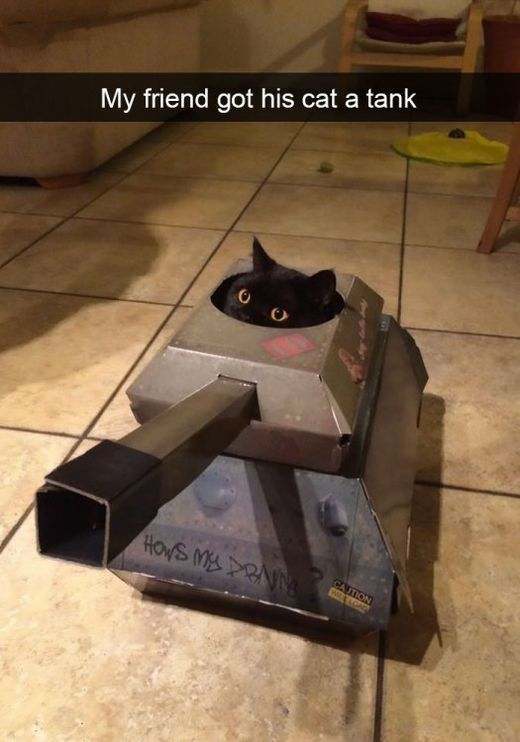 The Cat In The Tank - My friend got his cat a tank