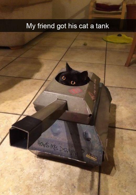 The Cat In The Tank - My friend got his cat a tank