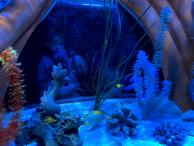 children looking in a tank of fish at SEA LIFE great yarmouth