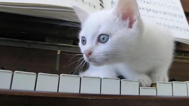 Ý nghĩa tâm linh mà mèo trắng mang đến cho chủ nhân của chúng