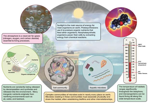 nutrisi bakteri, bakteriologi