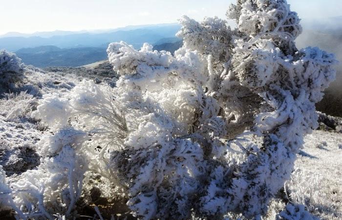 Vegetação Congelada em Urupema