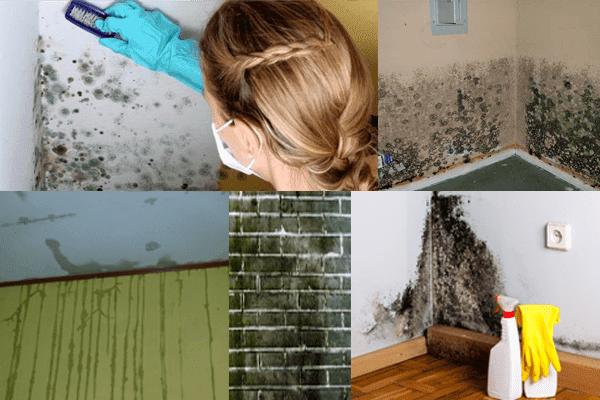 Cara Mengatasi Tembok Lembab dan Berjamur