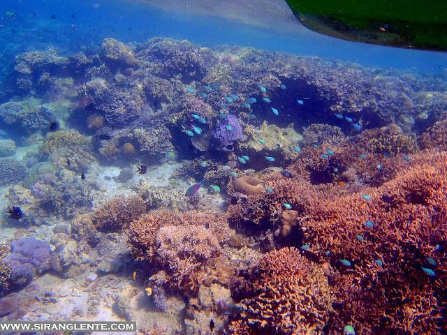 diving in Verde Island