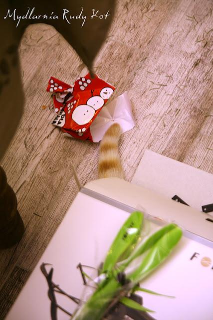 Rudy Kot od ktorego wzięła się nazwa mydlarni z Naturalnymi Mydłami, uwielbia zabawy z pudełkami :)