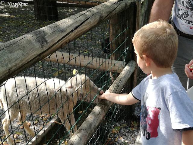 Nella fattoria di Leolandia si può dar da mangiare alle caprette