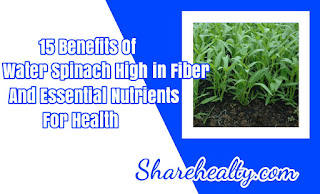 15 Benefits of Water Spinach High in Fiber and Essential Nutrients for Health