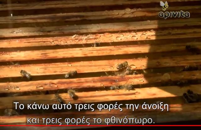 Νοζεμίαση και καταπολέμηση: Ντοκιμαντέρ με ελληνικούς υπότιτλους