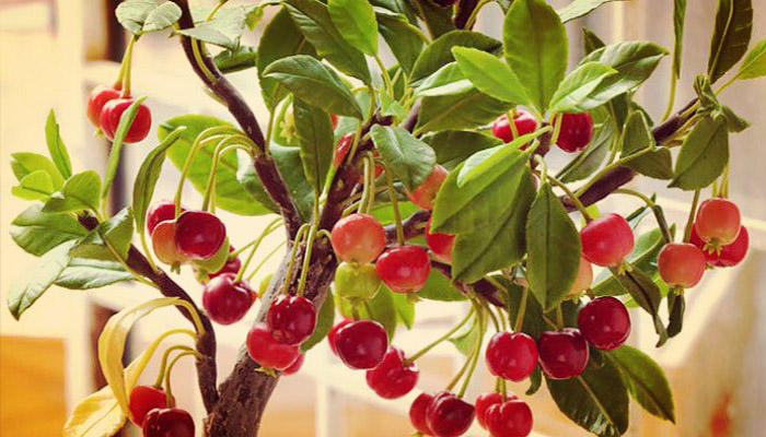 Plantas con frutas