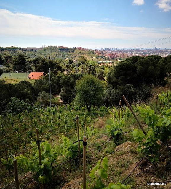 La Vinya d'en Sabater: El conreu de la vinya a Santa Coloma de Gramenet