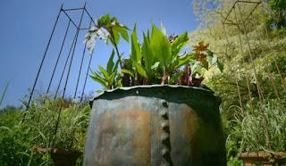 Exotic planter
