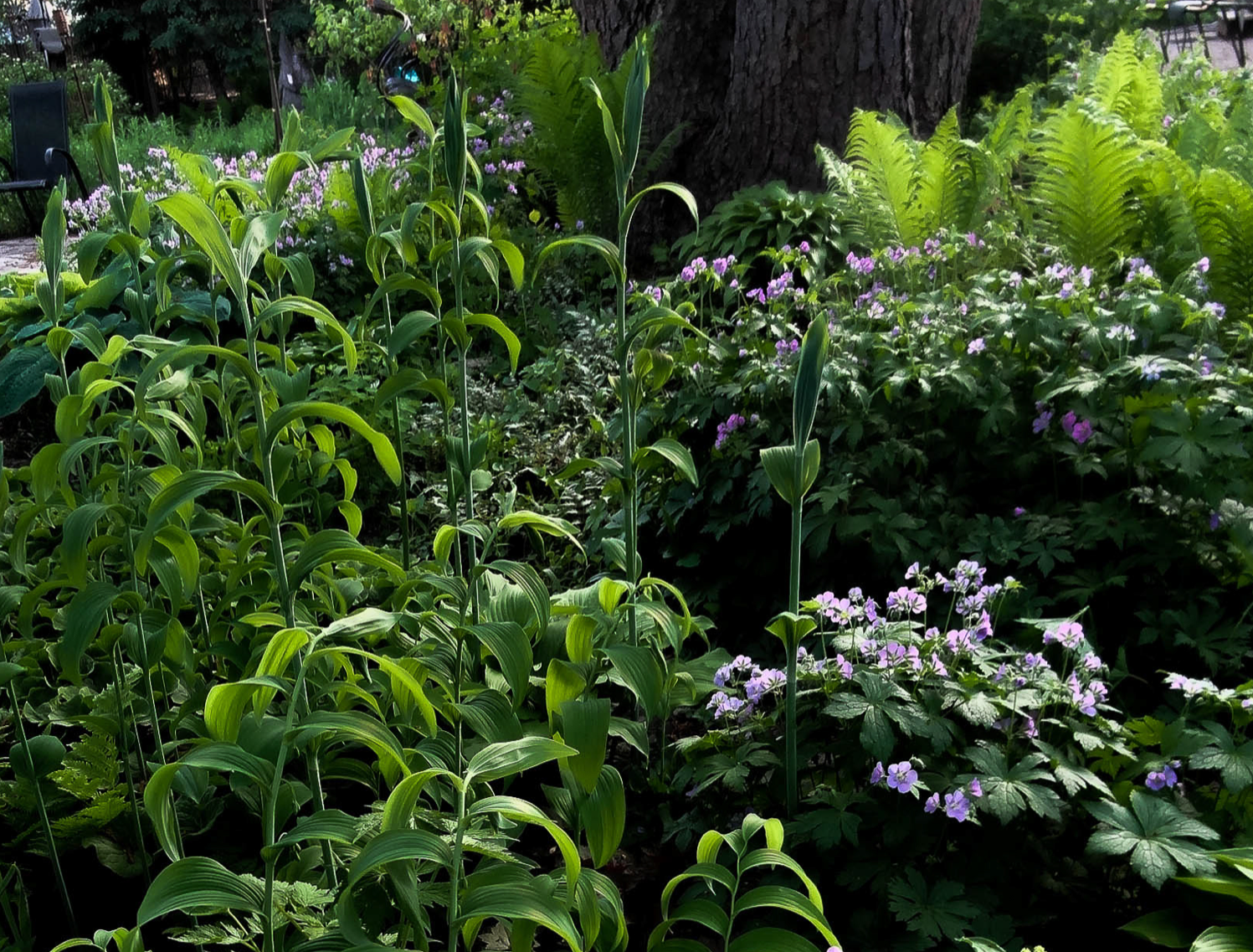Architect And Accomplished Photographer Jeremy Will Present His Roach To Creating An Urban Oasis Through Landscaping Gardening With Native Plants