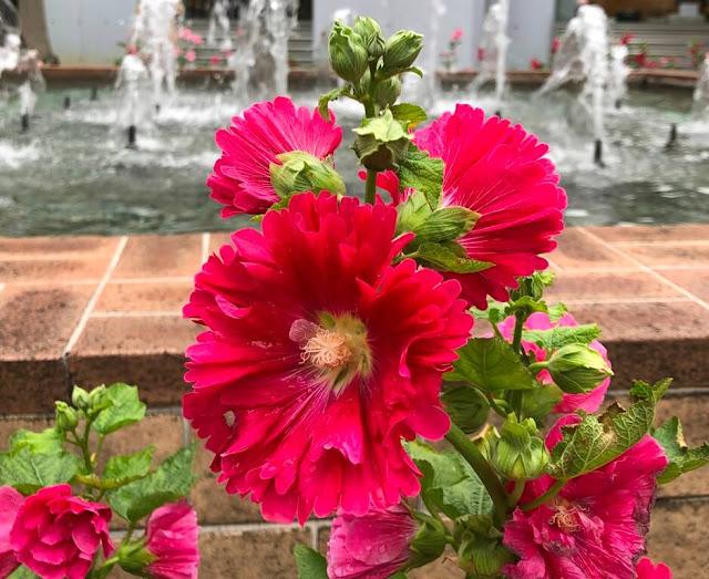 Flores Macau