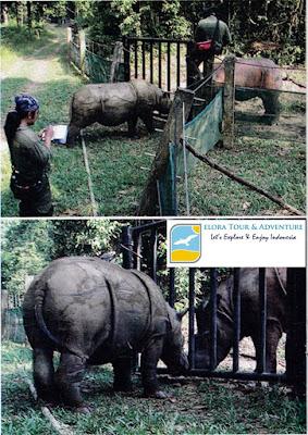 Badak di Suaka Rhino Sumatera Lampung