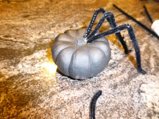 diy, painted pumpkin, spider, craft