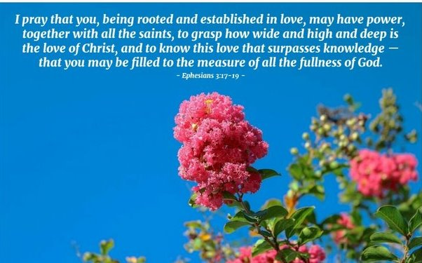 I pray that you, being rooted and established in love, may have power, together with all the saints, to grasp how wide and high and deep is the love of Christ, and to know this love that surpasses knowledge — that you may be filled to the measure of all the fullness of God.