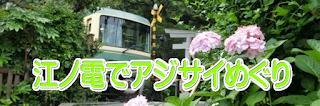江ノ電であじさい