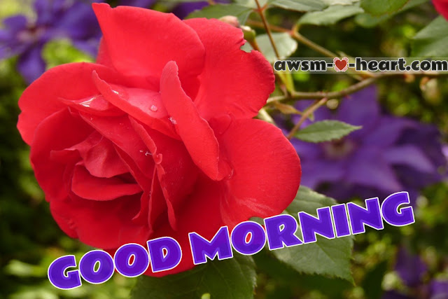 Good morning picture with rose flowers
