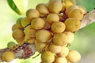 Manfaat dan nutrisi buah langsat.