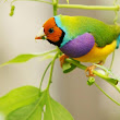 The Incredible Colors Of Birds