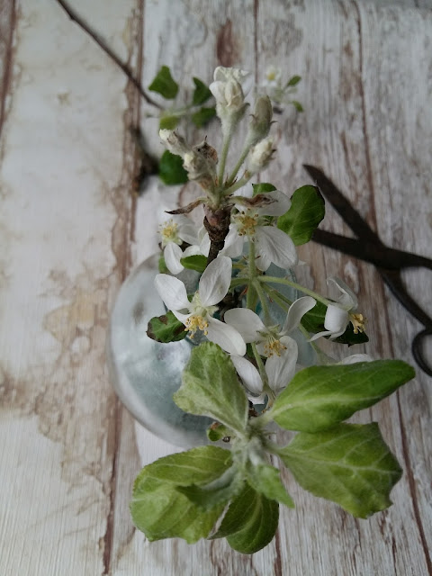 #kukkailottelua, omenapuunkukka, still life