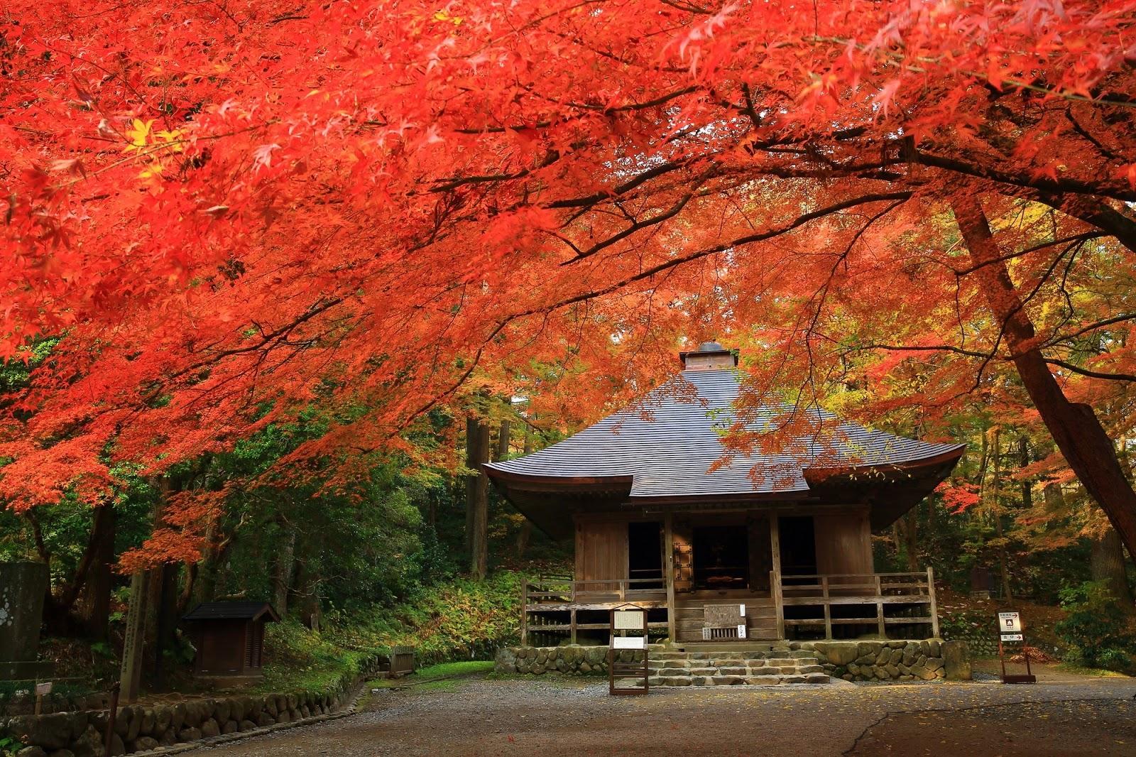 Autumn tugo - in Japan - BlogFanArt