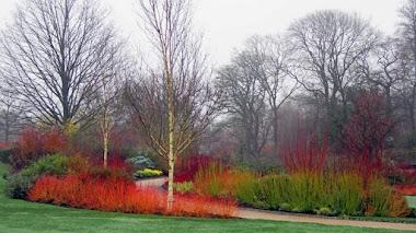 Jardines con paseos de invierno. RHS Harlow Carr