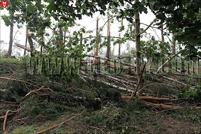 Поваленный лес у села Прилуки под Минском