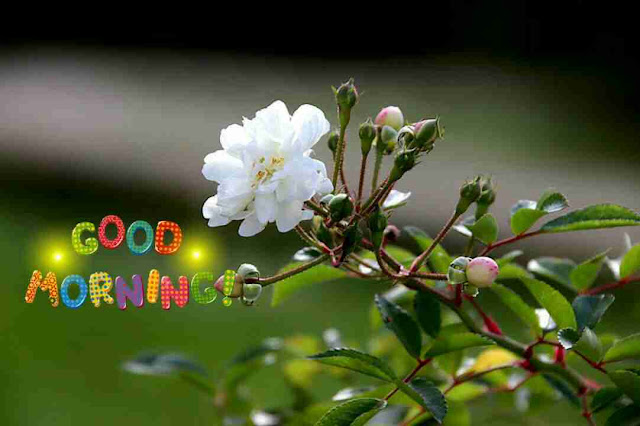 Awesome good morning image with white wild flower